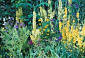 VERBASCUM GAINSBOROUGH  TROLLIUS CHINENSIS GOLDEN QUEEN    AQUILEGIA CHRYSANTHA AND ANCHUSA AZUREA LODDON ROYALIST  IN CHANNEL 4S 21ST CENTURY GARDEN  CHELSEA 1999