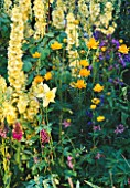 VERBASCUM GAINSBOROUGH  AQUILEGIA CHRYSANTHA  TOLLIUS CHINENSIS GOLDEN QUEEN AND ANCHUSA AZUREA LODDON ROYALIST. CHANNEL 4S 21ST CENTURY ST. GARDEN  CHELSEA 1999