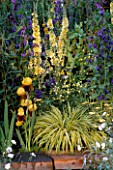 HAKONECHLOA MACRA AREOLA WITH IRIS RAJA AND ACHILLEA  ANTHEA AND VERBASCUM GAINSBOROUGH.  CHANNEL 4S 21ST CENTURY ST. GARDEN. CHELSEA 1999