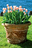 TERRACOTTA URN PLANTED WITH TULIP PINK DIAMOND AT THE VILLA MELZI  LAKE COMO  ITALY