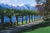 AVENUE OF PLANE TREES WITH LAKE COMO AND SNOW CAPPED MOUNTAINS BEHIND. VILLA MELZI  LAKE COMO  ITALY