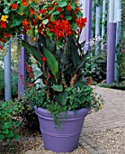 MAUVE CONTAINER WITH CANNA ASSAUT & SALVIA COCCINEA LADY IN RED WITH BLUE POLES & HANGING BASKET OF MIXED TROPAEOLUM. GARDENING WHICH/ MET. POLICE A SAFE HAVEN. HAMPTON 1999.