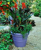 MAUVE CONTAINER WITH CANNA ASSAUT & SALVIA COCCINEA LADY IN RED & HANGING BASKET OF MIXED TROPAEOLUMS. GARDENING WHICH/ MET. POLICE A SAFE HAVEN. HAMPTON 1999.