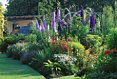 THE HERBACEOUS BORDERS  WITH VERBASCUM  DIGITALIS  PHYGELIUS  PAPAVER  CAMPANULA AND HARDY GERANIUMS. THE ABBEY HOUSE  WILTSHIRE.