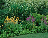 BORDER NEXT TO THE LAWN WITH NATURALISED CANDELABRA PRIMULAS  MATTEUCCIA STRUTHIOPTERIS AND TALL IRIS PSEUDACORUS BASTARDII. MERRIMENTS GARDENS  EAST SUSSEX.