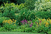 LATE SPRING BORDER DISPLAY OF NATURALISED CANDELABRA PRIMULAS AND TALL IRIS PSEUDACORUS BASTARDII. MERRIMENTS GARDENS  EAST SUSSEX.