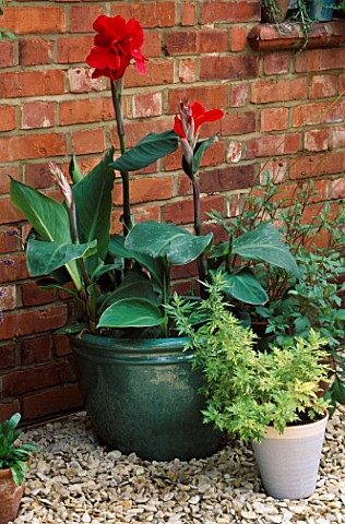 GREEN_CONTAINER_WITH_CANNA_PRESIDENT_NEXT_TO_WHITE_CONTAINER_WITH_ARTEMESIA_VULGARIS_ORIENTAL_LIMELI