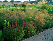 PERENNIAL PLANTING IN WALLED GARDEN BY CHRISTOPHER BRADLEY-HOLE: EPILOBIUM ANGUSTIFOLIUM ALBUM  KNAUTIA MACEDONICA  STIPA GIGANTEA  FOENICULUM PURPUREUM  PENSTEMON FIREBIRD