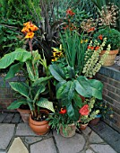 PHORMIUM BRONZE BABY CONTRASTS SHARPLY WITH CANNA PALLIDA VARIEGATA  HARDY BANANA  AND ANTHURIUM SCHERZERIANUM. ROBIN GREEN & RALPH CADES SEASIDE STYLE GARDEN  LONDON.
