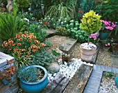 HOT AND COOL COLOURED PLANTS BORDER STEPS MADE FROM GRAVEL & SLEEPERS. WITH GAILLARDIA KOBOLD & LOBELIA AUGUSTIFOLIA. ROBIN GREEN AND RALPH CADES SEASIDE STYLE GARDEN  LONDON.