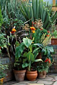 TERRACOTTA CONTAINERS HOLD THE VIVID COLOURED CANNA PALLIDA VARIEGATA & ANTHURIUM SCHERZERIANUM  WITH PHORMIUM BRONZE BABY. ROBIN GREEN & RALPH CADES SEASIDE STYLE GDN  LONDON.
