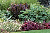 BORDER WITH COLEUS INDO 2  TETRAPANAX  CANNA AND PENNISETUM VILLOSUM FEATHER TOP. BILL SMITH AND DENNIS SCHRADERS GARDEN  LONG ISLAND  USA