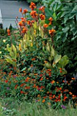 ORANGE BORDER: LANTANA RADIATION  SOLANUM ATROPURPUREA AND CANNA PRETORIA. BILL SMITH AND DENNIS SCHRADERS GARDEN  LONG ISLAND  USA