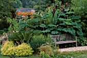 COLEUS THE LIME  CYCAS REVOLUTA  TETRAPANAX AND CANNA  PROVIDE PRIVACY FOR A WOODEN BENCH. BILL SMITH AND DENNIS SCHRADERS GARDEN  LONG ISLAND  USA