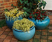 TURQUOISE CONTAINERS WITH CAREX EVERGOLD  ACORUS GRAMINEUS OGON AND SKIMMIA REEVESIANA. THE NICHOLS GARDEN  READING