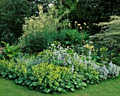 AQUILEGIAS  STACHYS  ALCHEMILLA MOLLIS  PHALARIS ARUNDINACEA  HOSTAS  CORNUS ALTERNIFOLIA ARGENTEA. THE WHITE HOUSE  SUSSEX