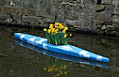 CANOE PAINTED TO RESEMBLE THE SKY AND PLANTED WITH NARCISSUS KING ALFRED. DESIGNED BY IVAN HICKS. GROOMBRIDGE PLACE  KENT.