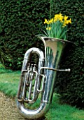 SILVER TUBA PLANTED WITH NARCISSUS TETE-A-TETE. DESIGNED BY IVAN HICKS. GROOMBRIDGE PLACE  KENT.