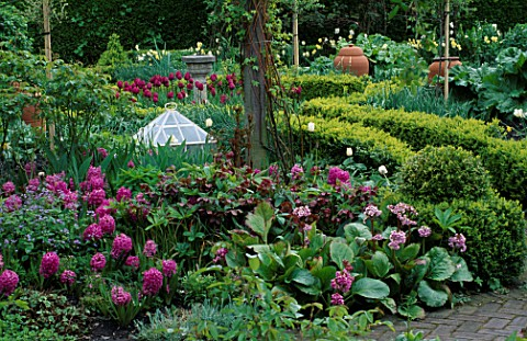 GLASS_CLOCHE__TERACOTTA_RHUBARB_FORCING_POTS_AND_BERGENIA_LORD_LEYCESTER_HOSPITAL_GARDEN__WARWICK