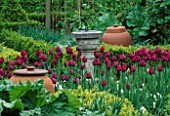 TULIP PINK IMPRESSION BESIDE TERACOTTA RHUBARB FORCING POTS AND SUNDIAL. LORD LEYCESTER HOSPITAL GARDEN  WARWICK