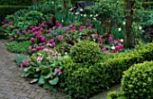 CLIPPED BOX ENCLOSES BORDER OF HYACINTH AMETHYST  BERGENIA  AND HELLEBORES. LORD LEYCESTER HOSPITAL GARDEN  WARWICK