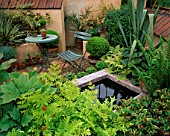 TERRACOTTA COURTYARD GARDEN WITH SMALL POND  TABLE AND CHAIR  GUNNERA  ASTILBE  PHORMIUM AND MATTEUCIA STRUTHIOPTERIS. BRINSBURY COLLEGES COURTYARD GARDEN  CHELSEA 2000