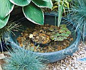 SMALL TURQUOISE BOWL OF WATER CREATES A MINIATURE POND. WITH HOSTA  FESTUCA AND NYMPHAEA. GODSTONE GARDENERS CLUB. CHELSEA 2000