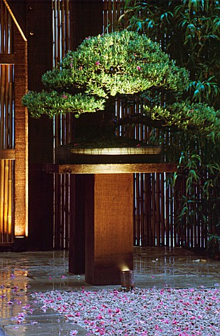 RAKED_GRAVEL__BAMBOO_AND_A_PINUS_BONSAI_ON_A_DARK_OAK_PLINTH_LIT_UP_AT_NIGHT_THE_ZEN_INSPIRED_GARDEN
