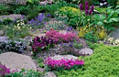 ROCK GARDEN WITH GENTIANA  AQUILEGIA THYMUS AND ROSCOEA. THE ALPINE GARDEN SOCIETYS MAGIC OF THE MOUNTAINS DESIGNED BY M. UPWARD/R. MERCER. CHELSEA 2000.