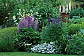 LAUNA SLATTERS GARDEN  OXON: BORDER WITH STACHYS  ACONITUM  LUPINS AND CENTRANTHUS