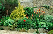 LAUNA SLATTERS GARDEN  OXON: RAISED BORDER WITH LONICERA NITIDA BAGGESENS GOLD  ALCHEMILLA MOLLIS  POPPIES AND KNIPHOFIA ATLANTA