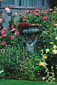 CAROLYN HUBBLES SHROPSHIRE GARDEN : BRONZE CUPID BESIDE ENGLISH ROSE TREVOR GRIFFITHS  ROSA PURPLE TIGER AND ROSA LICHTKONIGIN LUCIA