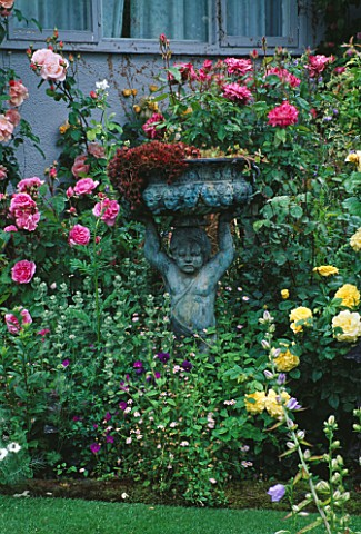 CAROLYN_HUBBLES_SHROPSHIRE_GARDEN__BRONZE_CUPID_BESIDE_ENGLISH_ROSE_TREVOR_GRIFFITHS__ROSA_PURPLE_TI