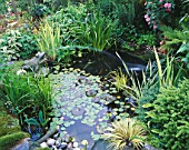 CAROLYN HUBBLES SHROPSHIRE GARDEN. WILDLIFE POND WITH MARBLE FROG  WATERLILIES  IRISES AND FERNS