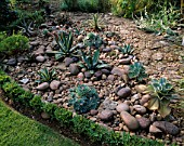 RED GABLES  WORCESTERSHIRE: THE COBBLED GARDEN WITH BOX HEDGING  AGAVES AND ECHEVERIAS