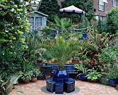 SLOPING BACK GARDEN WITH TERRACOTTA CRAZY PAVING PATIO  BLUE SEAT  TRACHYCARPUS FORTUNEI  CANNAS  PHORMIUMS AND BLUE SUMMERHOUSE  ROBIN GREEN & RALPH CADES GARDEN  LONDON