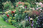 ROSES FLOURISH IN A COLOURFUL BORDER IN CAROLYN HUBBLES GARDEN  SHROPSHIRE