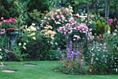 ROSES AND LAWN IN CAROLYN HUBBLES GARDEN  SHROPSHIRE