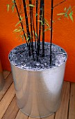 GALVANISED METAL CONTAINER WITH SLATE MULCH AND BLACK STEMMED BAMBOO - PHYLLOSTACHYS NIGRA