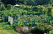 GENERAL VIEW OF ALLOTMENT WITH SWISS CHARD AND RUNNER BEANS