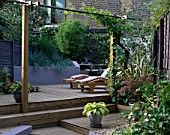 SPLIT LEVEL GARDEN WITH DECKING AND STEPS DESIGNED BY JOE SWIFT/ THAMASIN MARSH: MAPLE IN POT  HOSTA IN POT  LOUNGERS  PERGOLA WITH VINE  BAMBOO AND RAISED BORDER WITH BLUE GRASSES
