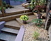 SPLIT LEVEL GARDEN WITH DECKING DESIGNED BY JOE SWIFT/ THAMASIN MARSH: MAPLE IN POT  HOSTA IN POT  LOUNGERS     SHELL MULCH AND STEPS DOWN TO BASEMENT