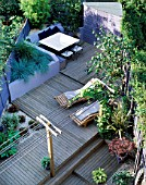 VIEW ONTO GARDEN. DESIGN: JOE SWIFT/ THAMASIN MARSH: PERGOLA WITH VINE  SUN LOUNGERS   SHED  DECKING  RAISED BED WITH BLUE GRASSES  SHELL MULCH  HOSTA AND MAPLE IN POTS