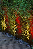 WALL PAINTED WINE RED AND YELLOW STEMMED BAMBOO (PHYLLOSTACHYS AUREA) LIT FROM BENEATH WITH DECKING AND STONE MULCH. LIGHTING BY GARDEN & SECURITY LIGHTING