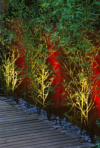 WALL_PAINTED_WINE_RED_AND_YELLOW_STEMMED_BAMBOO_PHYLLOSTACHYS_AUREA_LIT_FROM_BENEATH_WITH_DECKING_AN
