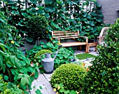 CITY ROOF TERRACE WITH LOLLIPOP BAY  NASTURTIUMS  WOODEN BENCH  GOURD GROWING ON TERRACE   BOX BALLS AND WOODEN BENCH. HEDENS LUSTGARD  SWEDEN