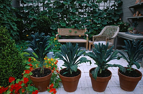 CITY_ROOF_TERRACE_WITH_LOLLIPOP_BAY__NASTURTIUMS__WOODEN_BENCH__GOURD_GROWING_ON_TRELLIS___BOX__WOOD