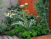 CITY ROOF TERRACE GARDEN WITH CYNARA SCOLYMUS GREEN GLOBE  PARSLEY  LATHYRUS ODORATUS BLACK KNIGHT AND ECHINACEA WHITE SWAN.  HEDENS LUSTGARD  SWEDEN
