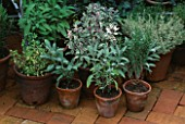 CITY ROOF TERRACE GARDEN WITH TERRACOTTA POTS PLANTED WITH HERBS (L-R VARIEGATED OREGANO  SAGE  ROSEMARY AND VARIEGATED THYME)  HEDENS LUSTGARD  SWEDEN