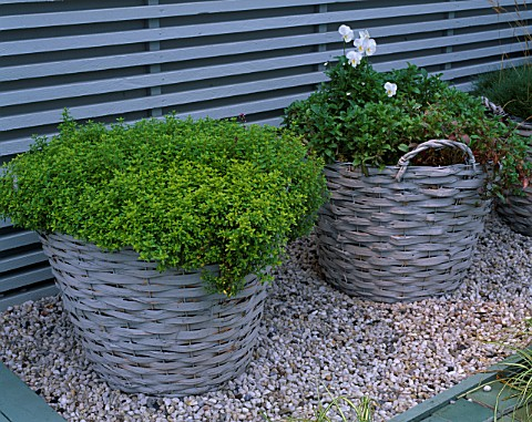 CITY_ROOF_TERRACE_GARDEN_WITH_BASKET_PLANTED_WITH_THYME_AND_PANSIES_HEDENS_LUSTGARD__SWEDEN
